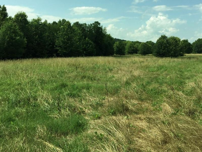 Cr-74 Pasture And Hunting Land : Russellville : Franklin County : Alabama