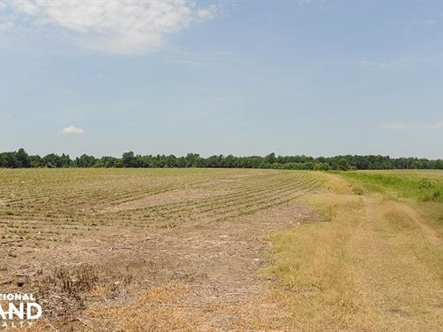 Cropland With Pond : Marion : South Carolina