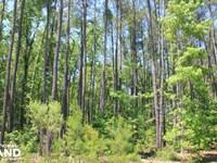 Bonneau Gated Community Large Acrea : Bonneau : Berkeley County : South Carolina