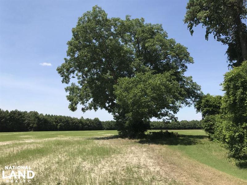 Waterfront Pastureland Homesite : Tar Heel : Bladen County : North Carolina