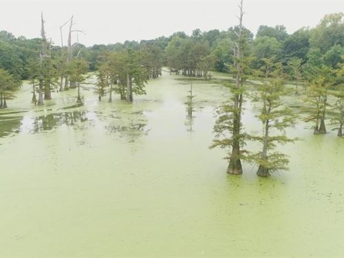 45 Acre Ms. Delta Duck,Deer, And fi : Belzoni : Humphreys County : Mississippi