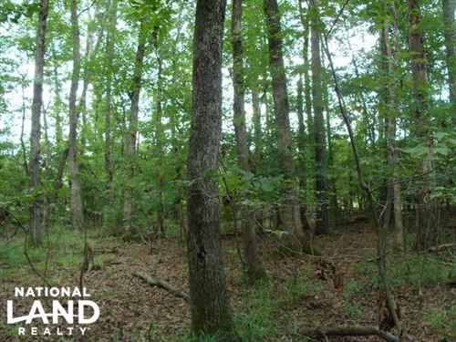80 Acres of Timberland & Hunting : Mena : Polk County : Arkansas