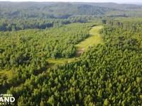 Tabernacle Road Hunting And Timber : Northport : Tuscaloosa County : Alabama