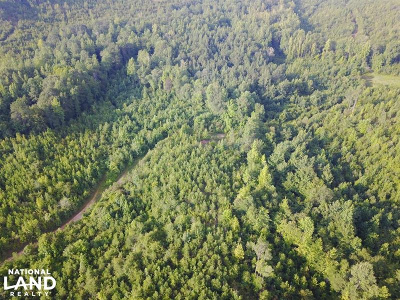 Tabernacle Road West Tract Hunting Farm For Sale Northport