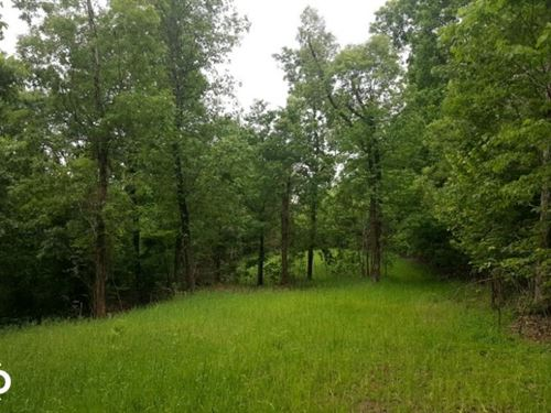 20 Acre Ozark Mountain Timberland : Vendor : Newton County : Arkansas