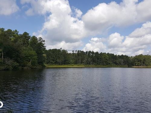Hickory Springs 32 Acre Tract- Wate : Livingston : Polk County : Texas