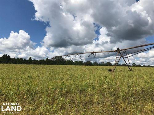 Wheeler County Irrigated Farm, Timb : Glenwood : Wheeler County : Georgia