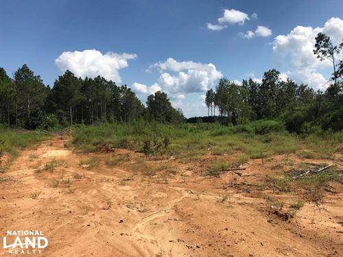 Gordo Hunting Opportunity : Gordo : Pickens County : Alabama