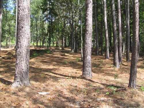 Private Gated Community Indian Lake : Cedar Grove : Carroll County : Tennessee