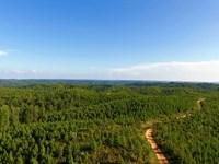 Tract 1115- Sealed Bid Land Sale : Waterloo : Lauderdale County : Alabama