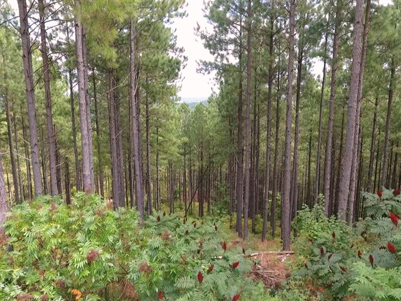 Tract 1801, Big Branch Tract : Booneville : Tippah County : Mississippi
