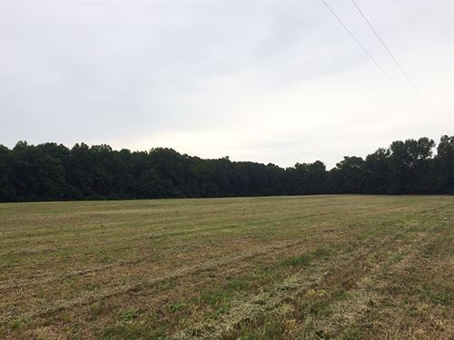 Nice Pasture Properties : Griffin : Spalding County : Georgia