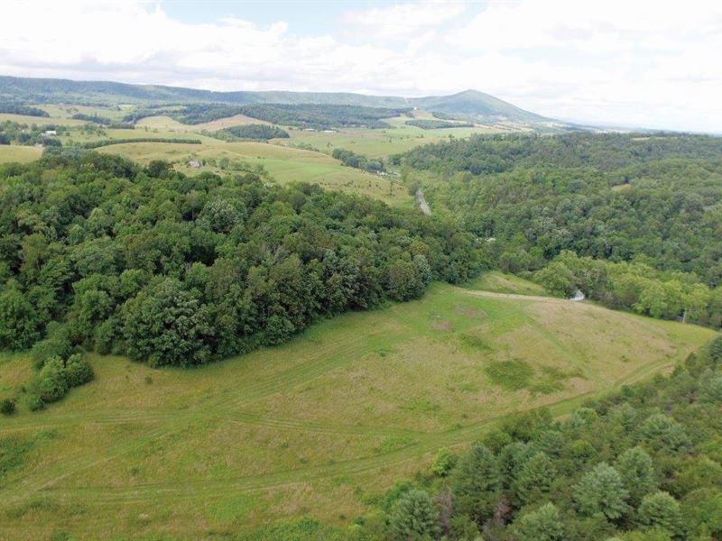 Real Estate Auction- 348.9 Acres : Draper : Pulaski County : Virginia
