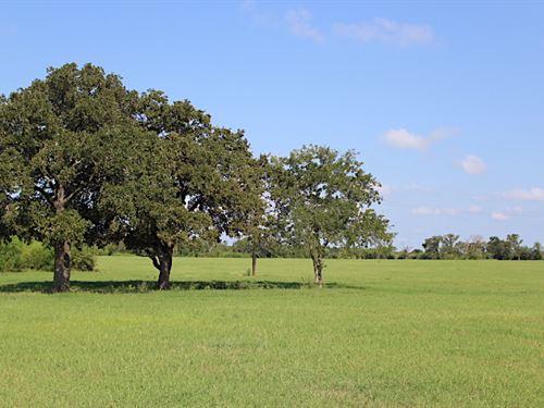 North Zulch Land Auction : North Zulch : Madison County : Texas