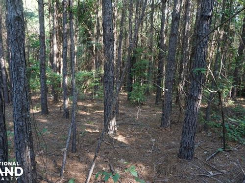 Union Road Homesite, Pasture, And : Vance : Tuscaloosa County : Alabama