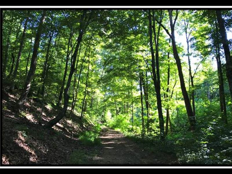 36 Acres In Park Like Setting : Lucasville : Pike County : Ohio