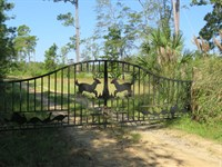 Ritter Salk Tract : Walterboro : Colleton County : South Carolina