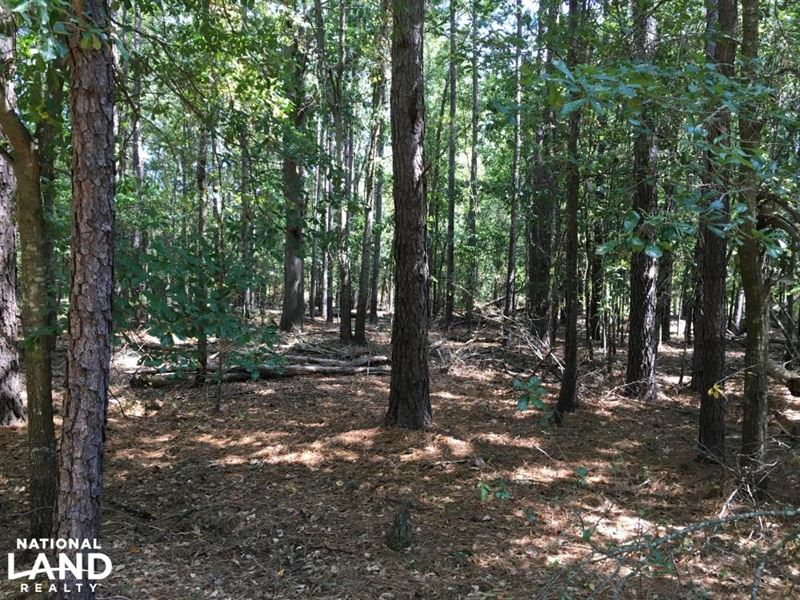 Blacks Rd Hunting & Recreational Tr : Williston : Barnwell County : South Carolina