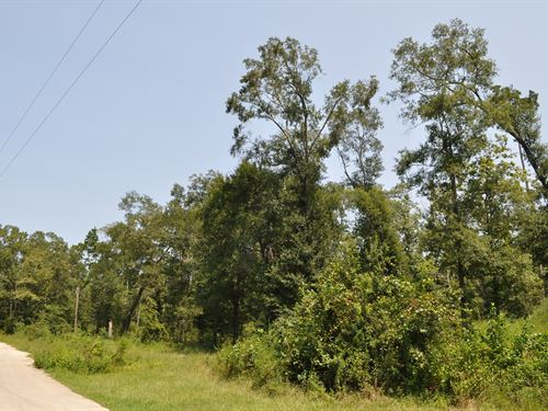 29.7 Acres Crossno Drive : Cleveland : Montgomery County : Texas
