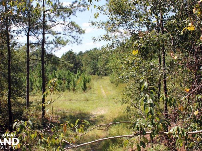 Fellowship Rd Hunting And Timberlan : Williston : Barnwell County : South Carolina