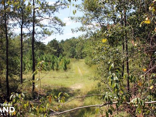 Fellowship Rd Hunting And Timberlan : Williston : Barnwell County : South Carolina