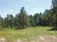 Rosemary Creek Hunting And Timber : Williston : Barnwell County : South Carolina