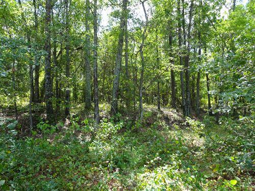 Highway 49 Hunting Tract : Macon : Jones County : Georgia