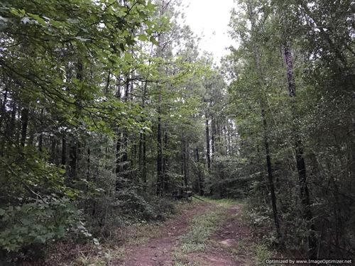 Hunting And Timber Investment Tract : Bogue Chitto : Lincoln County : Mississippi