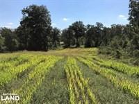 Ready's Pond Tract : Aiken : Aiken County : South Carolina