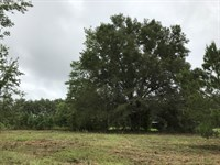 N Fl Residential Home Site For Sale : O'brien : Columbia County : Florida
