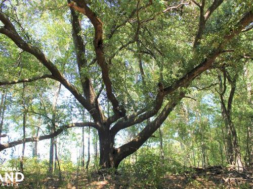 Govan Hunting & Recreational Tract : Govan : Bamberg County : South Carolina