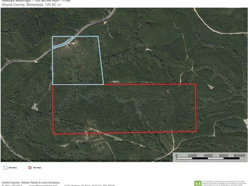 120 Acres In Wayne County, Ms : Waynesboro : Wayne County : Mississippi