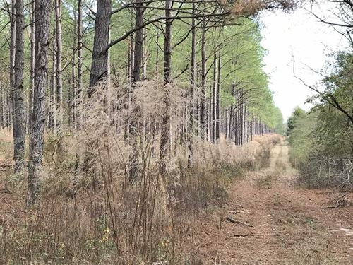 County Road 152 Tract : Banks : Pike County : Alabama