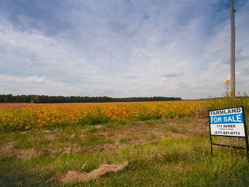 Prime Location Farmland With Timber : Island Grove : Jasper County : Illinois