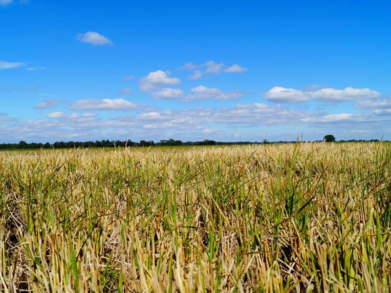 Dermott Farm : Dermott : Drew County : Arkansas
