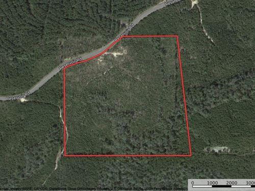 Land For Sale In Clara, Wayne Count : Waynesboro : Wayne County : Mississippi