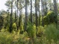 Carolina Timber Land With Creek : Chesterfield : Chesterfield County : South Carolina