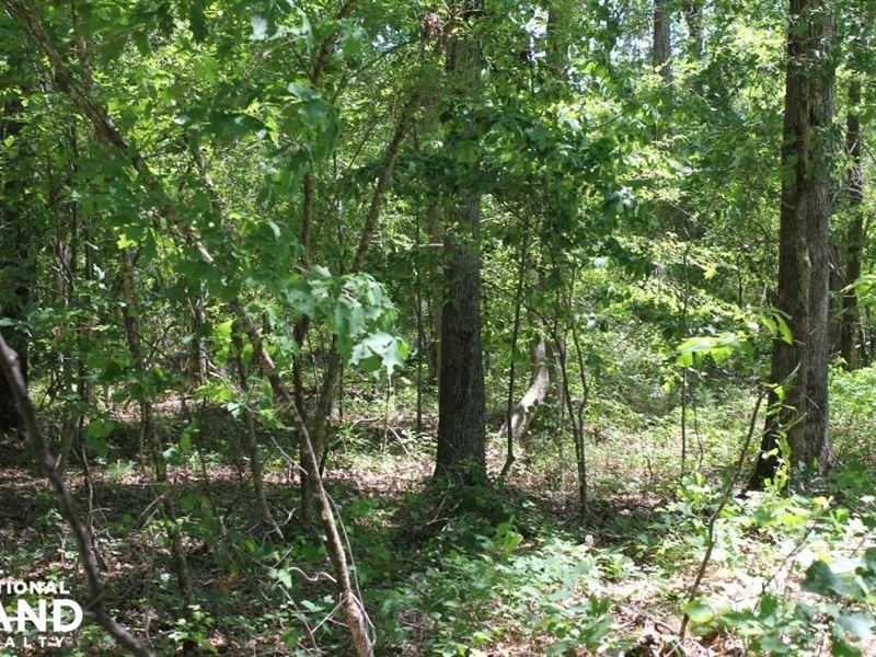 Sulligent Timber Investment And Hun : Sulligent : Lamar County : Alabama