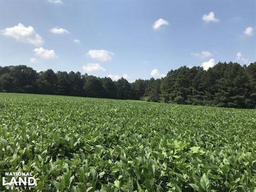 Farm And Timber Tract Near Bouie RI : Sumrall : Covington County : Mississippi