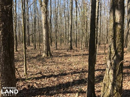 Payne Field Mature Hardwoods And Cr : West Point : Clay County : Mississippi