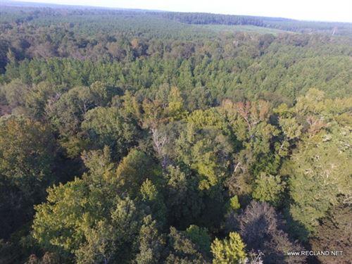 47 Ac - Timberland & Hunting Al : Farmerville : Union Parish : Louisiana