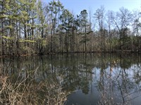 25.81 +/- Wooded Acres With Pond : Rome : Floyd County : Georgia