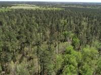 125 Acres Wooded : Waynesboro : Burke County : Georgia