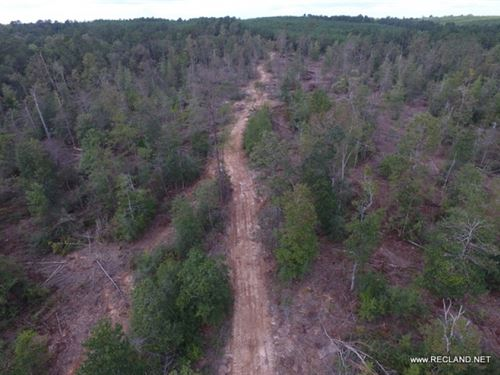 148 Ac, Wooded Tract For Hunting : Jasper : Texas