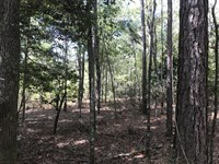 400 Acres Farm And Timber : Brantley : Crenshaw County : Alabama