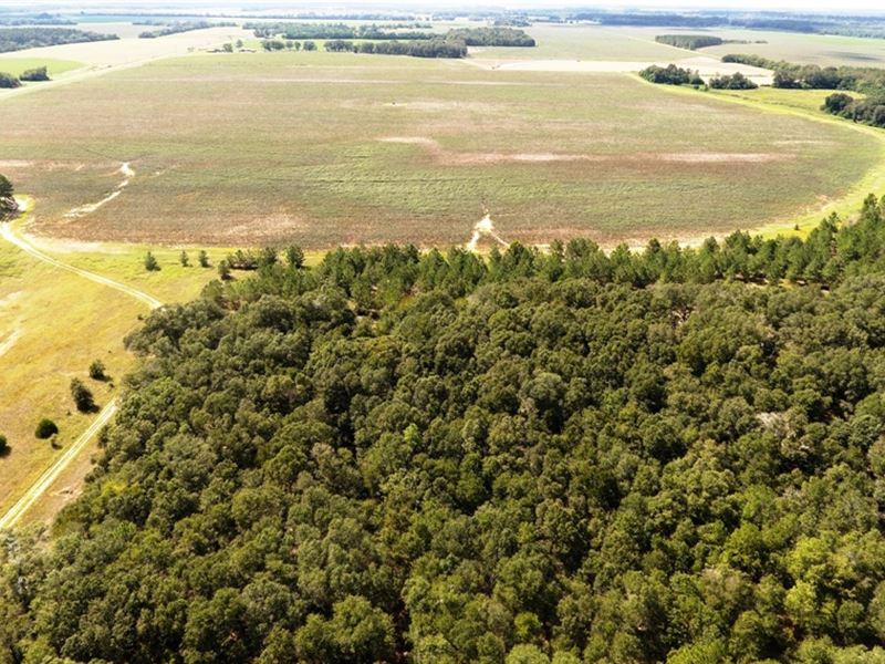 Productive Farm Land - Shellman Ga : Shellman : Randolph County : Georgia