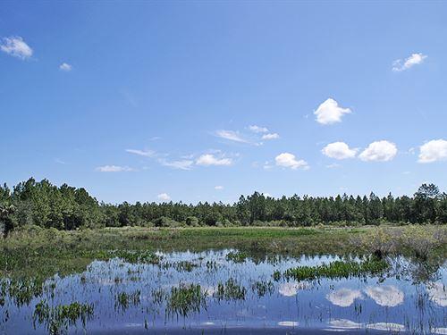 Pollywog Ranch : Labelle : Glades County : Florida