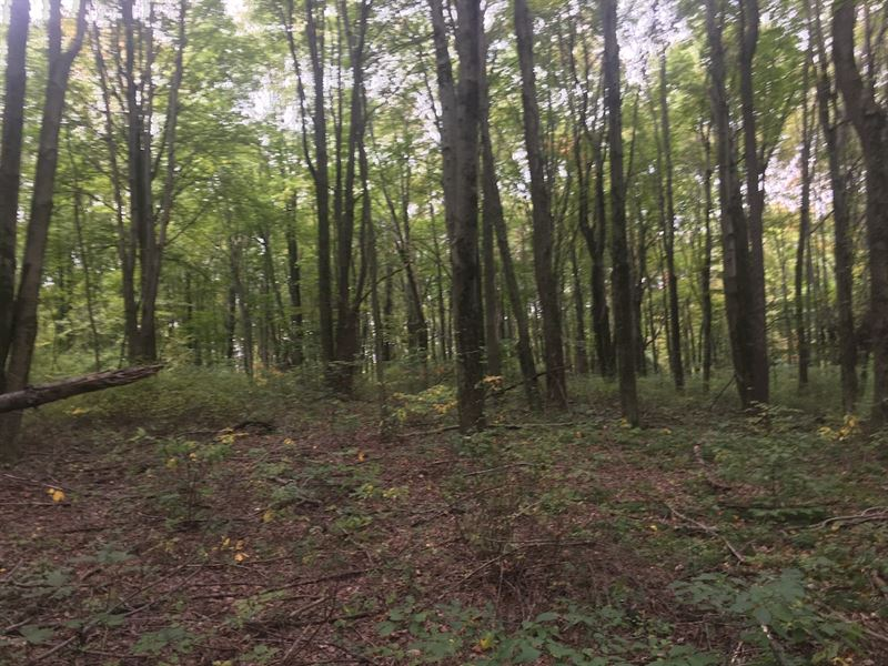 Crawmer Rd - 28 Acres : Newark : Licking County : Ohio