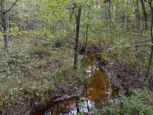 40 Acre Parcel Many Possibilities : Friendship : Adams County : Wisconsin