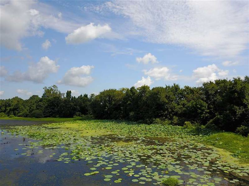 Price Reduced, 109.5 Acre Farm Wit : Holly Grove : Monroe County : Arkansas